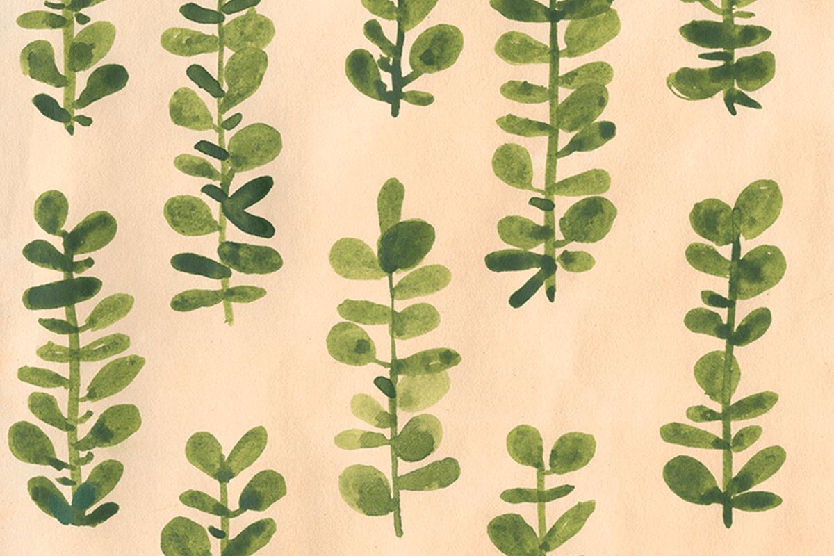 mdp-eucalyptus