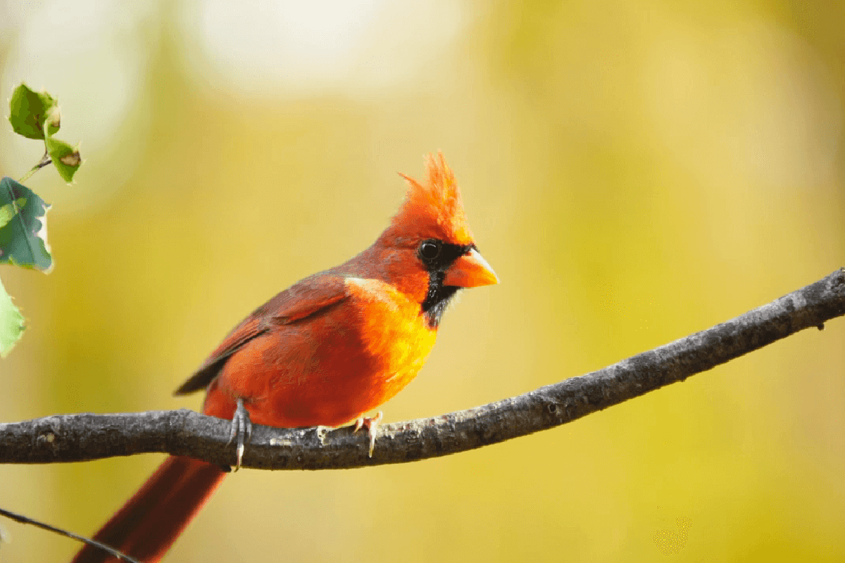thumb-ESA-Powerlines-Video-Cardinal